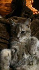 Munchi, chat Gouttière