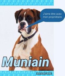 Muniain, chien Boxer