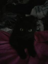 Murffie, chat