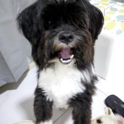 Murphy, chien