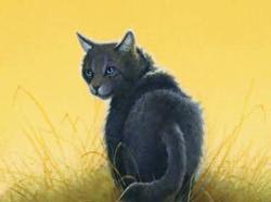 Museau Cendré, chat