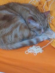 Mylène, chat