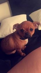 Mylo, chien