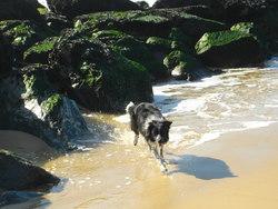 Mylo, chien Border Collie