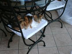 Mylssi, chat Gouttière