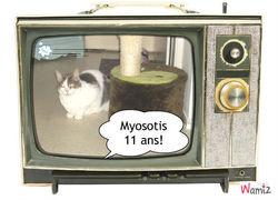 Myosotis Dit Titi, chat Européen