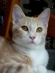 Myra, chat Gouttière