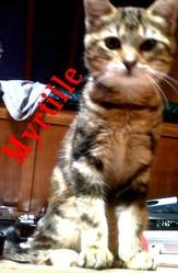 Myrtille, chat