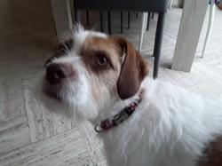 Myrza, chien