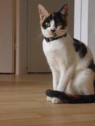 Mystic, chat Gouttière
