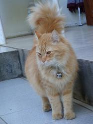 Myuu, chat Gouttière