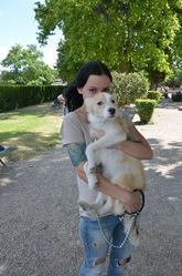 N'Joy, chien Border Collie