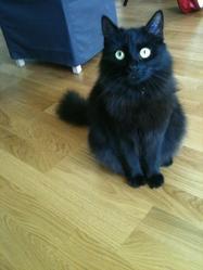 Naala, chat Gouttière