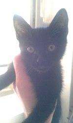 Nagao, chat Gouttière
