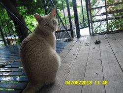 Nala, chat Gouttière