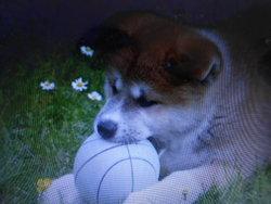 Nala, chien