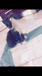 Nalla, chaton