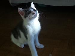 Nami, chat Gouttière