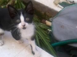 Namis, chat Gouttière