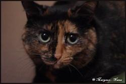 Nana, chat Gouttière