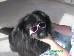 Nana, chien Terre-Neuve