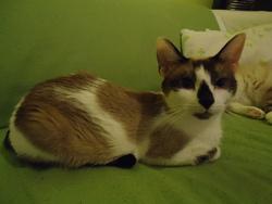 Yukia, chat Gouttière