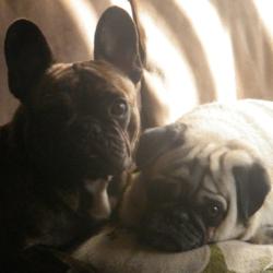 Nana Et Buster, chien