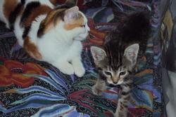 Nana Et Mimine , chat Gouttière