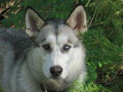 Nanouk, chien