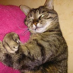 Nany, chat Gouttière