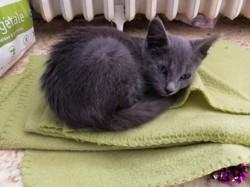 Naos, chaton Gouttière