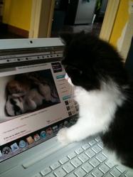 Napoléon, chat Gouttière