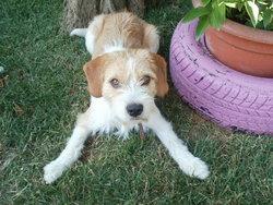 Naroto, chien