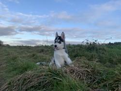 Natsu, rongeur Hamster