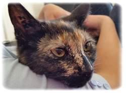 Nausicaa, chat Gouttière