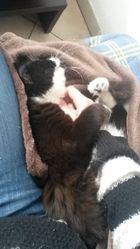 Néah, chat Gouttière