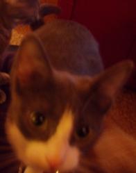 Nefen, chat Gouttière