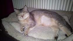 Néfertiti, chat Gouttière