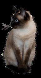 Nefertiti, chat