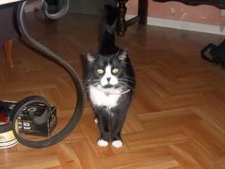 Négresse, chat Gouttière