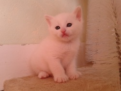 Neige, chat