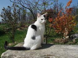 Neige, chat Gouttière
