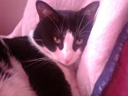 Neji, chat Gouttière
