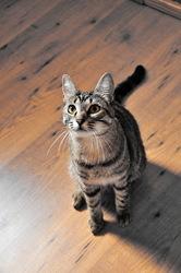 Neko, chat Gouttière