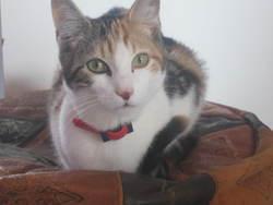 Neliel Alias Nel, chat Gouttière