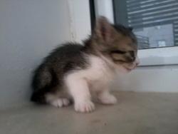 Nelly, chat Gouttière