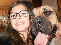 Nelly, chien Bullmastiff