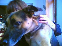 Nelson, chien