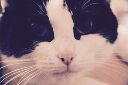 Nemizia, chat Gouttière