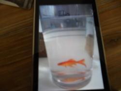 Nemo, autres